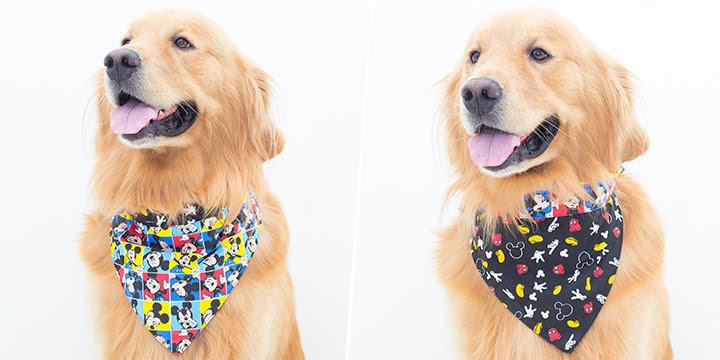 bandana para cachorro mickey