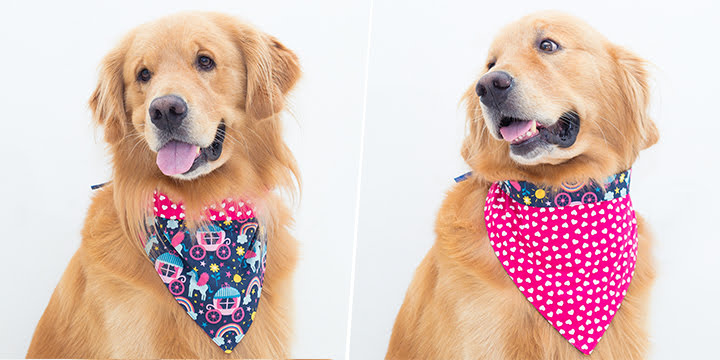 bandana para cachorro unicórnio azul