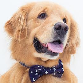 gravata para cachorro